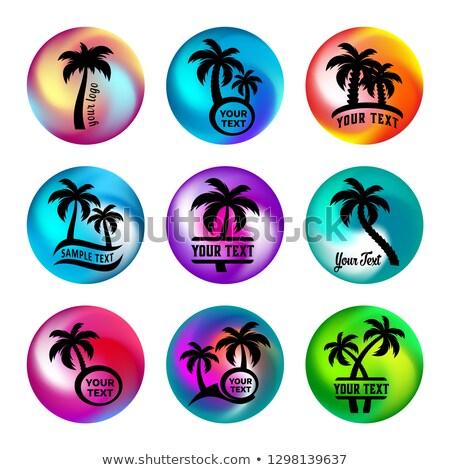 Regenboog bal zoals knoppen palmbomen palmboom Stockfoto © blumer1979