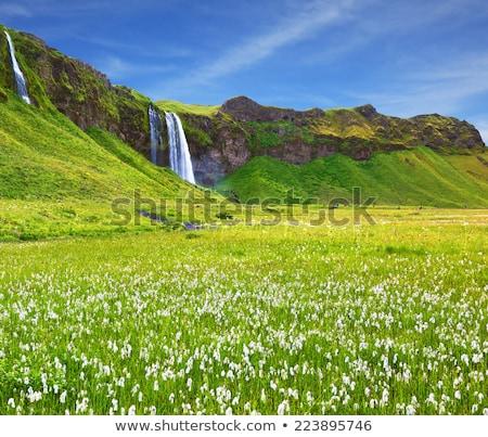 Waterval IJsland populair toeristische attractie zomer Stockfoto © Kotenko