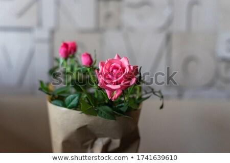 kezek · csomagolás · virágcsokor · rózsák · papír · felső - stock fotó © furmanphoto