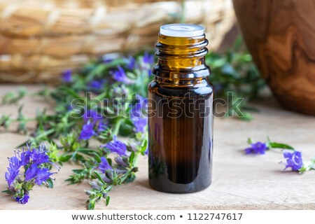 a bottle of hyssop essential oil with fresh blooming hyssop stock photo © madeleine_steinbach