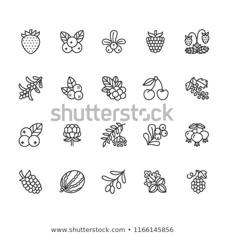 Erdő bogyók ikon szett étel appok weboldalak Stock fotó © nosik