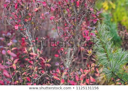 rózsaszín · virágok · pont · égbolt · tavasz · erdő - stock fotó © galitskaya