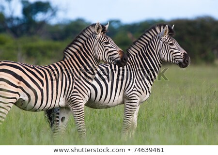 два другой игры резерв ЮАР Сток-фото © simoneeman