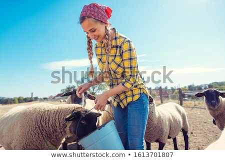 Farmer feeding her farm sheep Stock photo © Kzenon