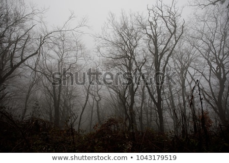 Bos dode bomen bergen Washington Stockfoto © craig