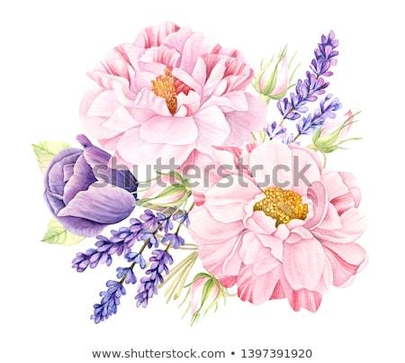 Roze violet tulpen bloemen tulp bloem Stockfoto © neirfy