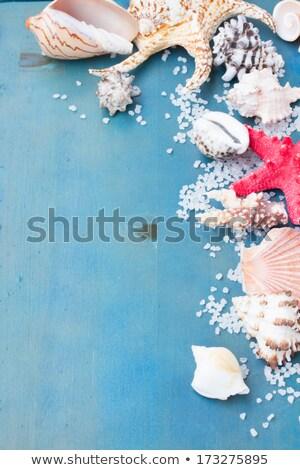 海塩 海 シェル 木製 木材 自然 ストックフォト © grafvision