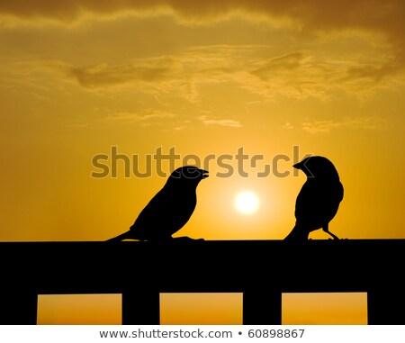 Pardal pequeno falar pôr do sol natureza jardim Foto stock © Ansonstock