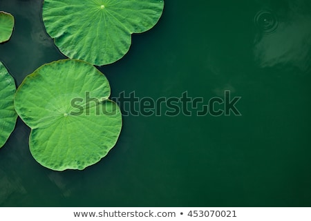 leaf of waterlily with dew Stock photo © Ansonstock
