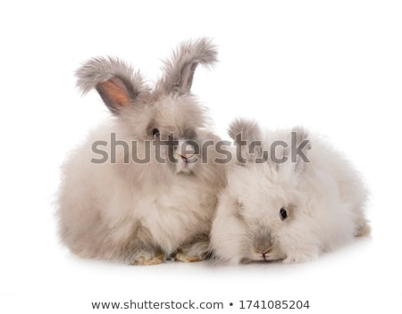 Lapin blanche lapin animaux animal fourrures Photo stock © eriklam