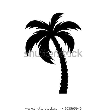 Stockfoto: Black On White Palm Tree Silhouette