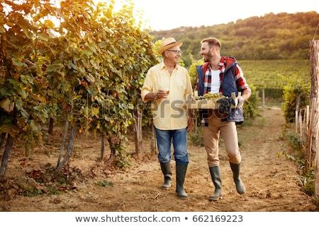 moço · trabalhando · vinha · bonito · vinho · homem - foto stock © photography33