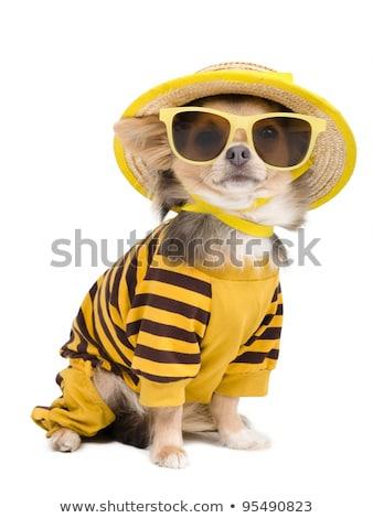 Cut мало собака солнце Солнечный ярко Сток-фото © Alvinge