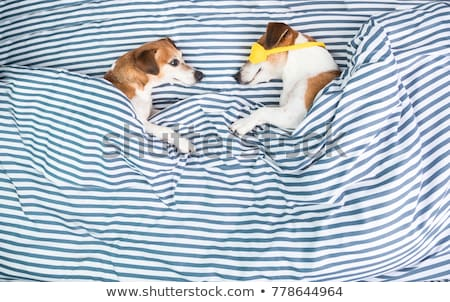 Stock photo: couple snuggling in bed