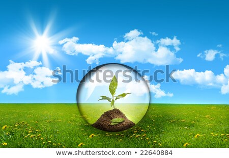 Glass sphere in a field of tall grass Stock photo © Sandralise