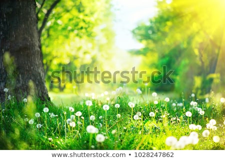 Tranquil Scene in a Garden Stock photo © tepic