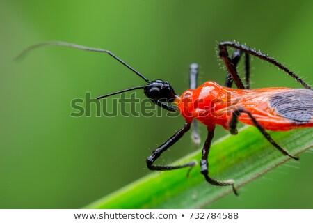 Merénylő rovar fából készült palánk rovar kint Stock fotó © brm1949