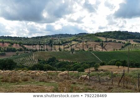 Stok fotoğraf: San Gimignano 17