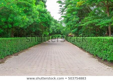 Tiled stone walkway Stock photo © kbuntu