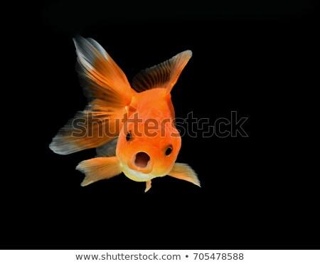 金魚 · 孤立した · 白 · 金 · 水中 · 新鮮な - ストックフォト © alptraum