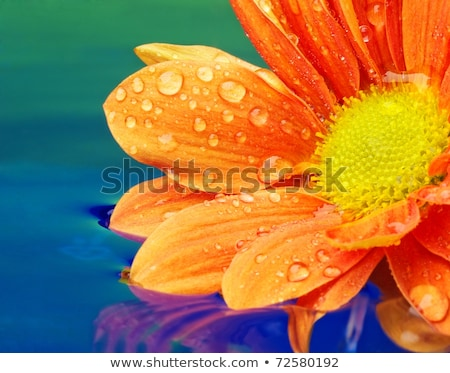 Orange with a flower and reflections stock photo © iko