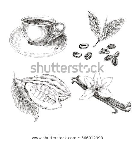Chocolate grãos de café temperos cacau medicina gordura Foto stock © joannawnuk