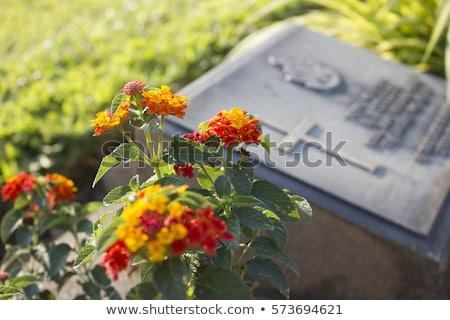Amerykański cmentarz kwiaty trawy zielone banderą Zdjęcia stock © meinzahn