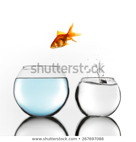 fish escaping into bigger tank stock photo © andreypopov