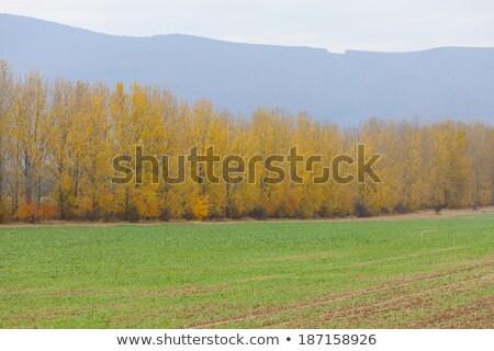 Automne paysage Slovaquie domaine vert usine Photo stock © phbcz