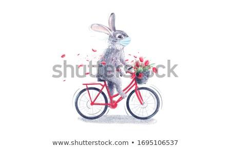 Tavşan doktor veteriner tavşanlar adam hayvan Stok fotoğraf © armin_burkhardt