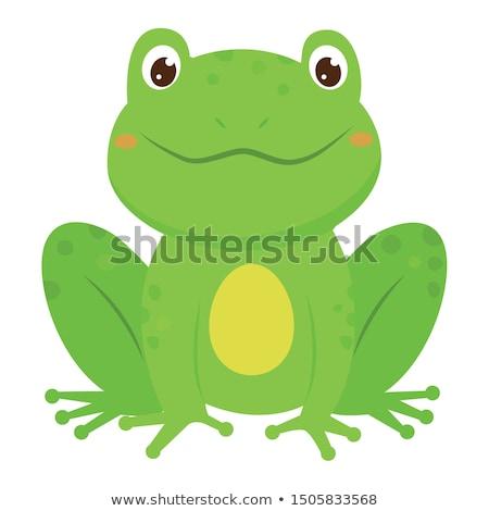 Desenho animado verde sapo isolado branco feliz Foto stock © anbuch