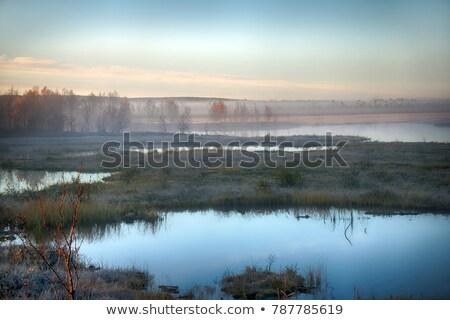 Vallen kleurrijk Wyoming natuur bomen groene Stockfoto © emattil
