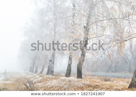 утра мороз аллеи природы свет снега Сток-фото © olandsfokus