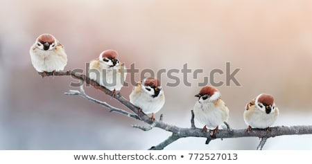Funny zimą ptaków śniegu charakter Zdjęcia stock © Vg