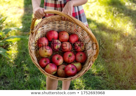Photo stock: Portrait · femme · souriante · panier · pommes · jardin