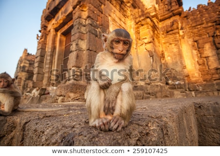 baby monkeys in thai temple stock photo © witthaya