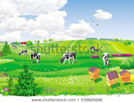 Cows field concept Stock photo © Krisdog