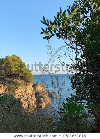 Karadağ · tipik · köy · evler · alanları - stok fotoğraf © master1305