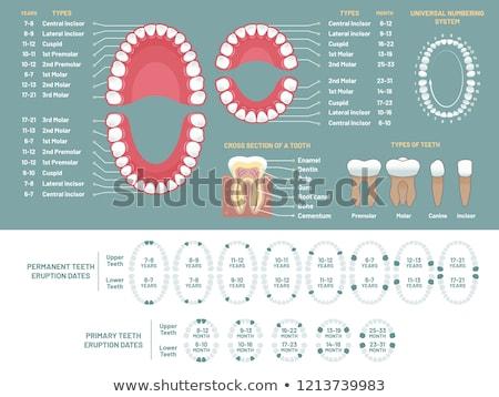 dente · illustrazione · studio · dentista · care · dental - foto d'archivio © adrenalina