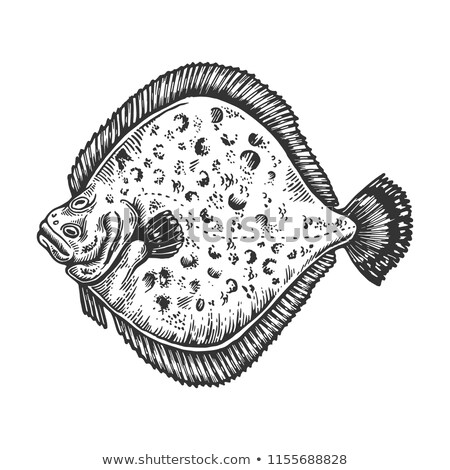 ヨーロッパの 色 実例 魚 自然 海 ストックフォト © Morphart