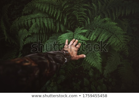 wild ferns with hikers stock photo © morrbyte