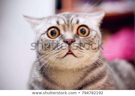 кошки · вверх · смешные · голову · студию - Сток-фото © h2o