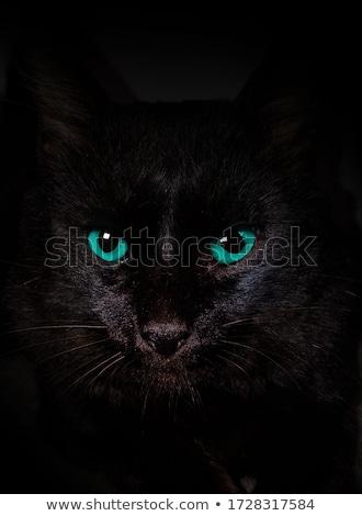 black cat blue eyes Stock photo © romvo