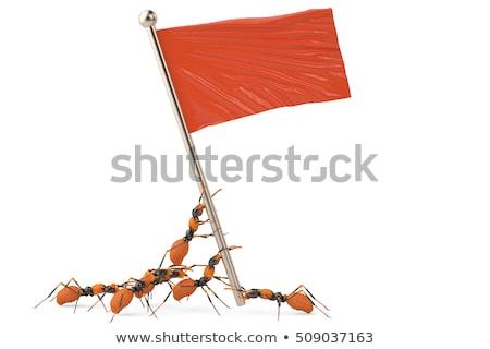 Engraçado exército vermelho formigas madeira mãe Foto stock © adrenalina