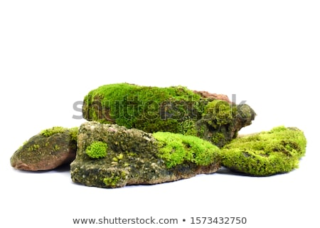 Moss on the tree and fern Stock photo © lostation