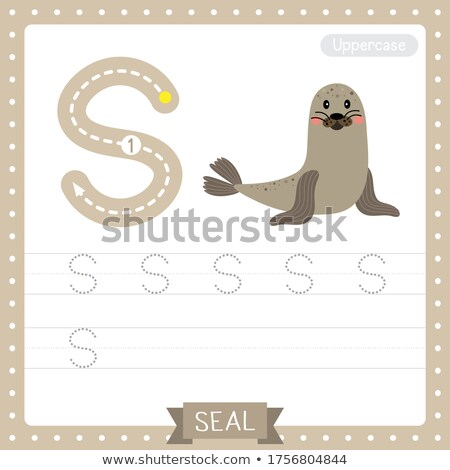 flashcard letter s is for sea lion stock photo © bluering