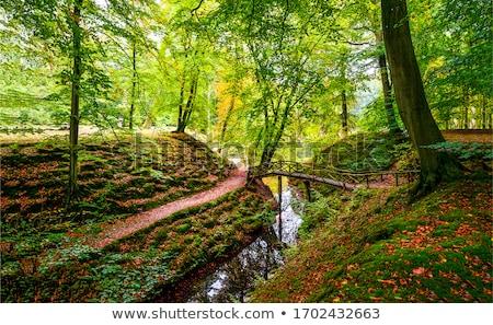 желтый · клен · деревья · осень · горные · ручей - Сток-фото © berczy04