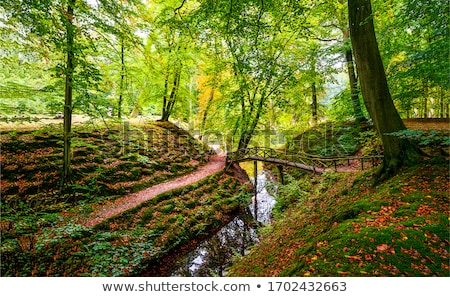 autumn forest creek stock photo © berczy04