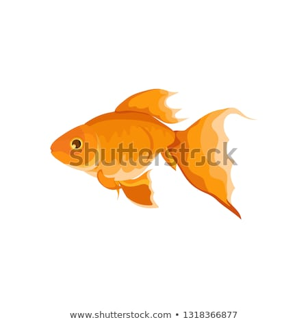 Cartoon  on 757228 Goldfish Cartoon Por Sifis