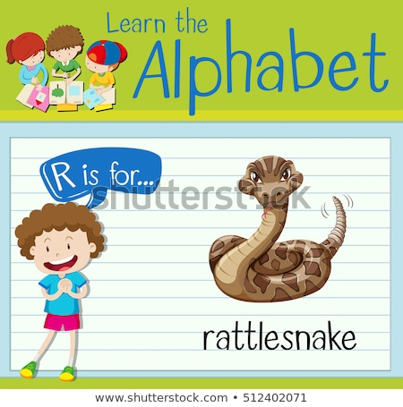 Flashcard letter r is for rattle snake Stock photo © bluering